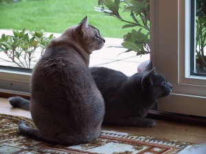 two cats